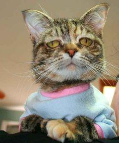 Meet Tucker, she is adoptable in Washington! Please read article