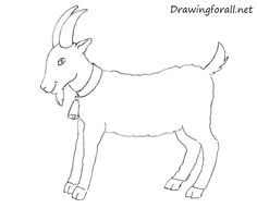 how to draw a goat for beginners drawingforallnet