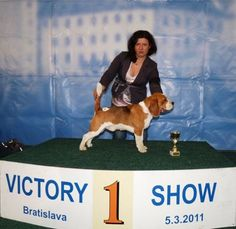 Basic Drive's Just Start Again (Justin) - Vienna Calling – The Beagle Kennel