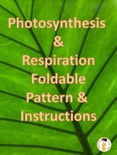Photosynthesis and Respiration Foldable - Two Versions: In this lesson students will create a flippable comparing and contrasting photosynthesis and cellular respiration. This flippable includes two sets of directions.  1) set of directions to create the
