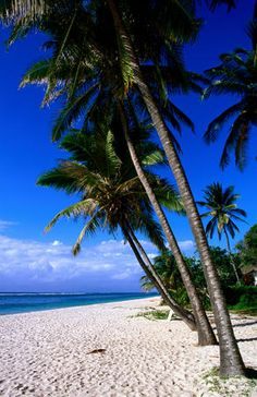 Coconut palms, Tiwi Beach, Kenya
