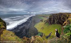 A solitary puffin lives life on the edge as it stares out at a coastal landscape from its cliff top perch on the volcanic peninsula of Dyrholaey, in southern Iceland. (Photo by Christian Schweiger/Solent News & Photo Agency) Nature Photography, Travel Photography, Photography Photos, Iceland Island, Photo Voyage, Iceland Landscape, Les Cascades, Voyage Europe, Destination Voyage