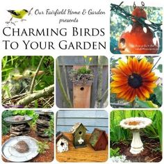 Birds benefit the garden - how to attract them and keep them coming back! Great tips at http://ourfairfieldhomeandgarden.com/charming-birds-to-your-garden/