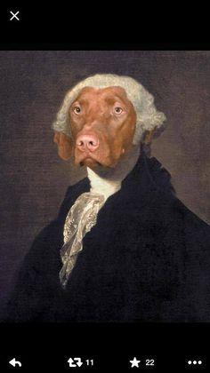 Happy President's Day, from America's Dog - Jasper Vizsla!