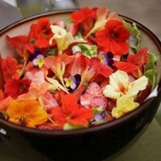 Nutricionista ensina quais flores podemos comer e como preparar uma salada colorida com capuchinhas...