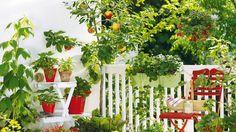 Lunárny kalendár záhradkára.