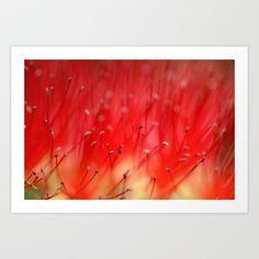 Callistemons secret 2517 Art Print by metamorphosa - $22.88
