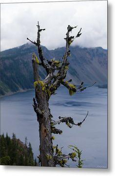 Dead Tree Metal Print By Alexander Fedin