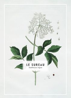 a marriage of the classically beautiful botanical print, and clean, well placed type.