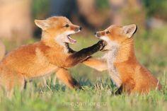 You Talk Too Much byMegan Lorenz. mlorenzphotography