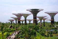 Supertrees Singapore | Supertrees in the City of Vertical Green - Danish Architecture Centre