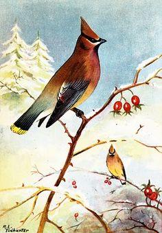 Vintage printable birds