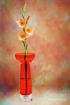 #Gladioli #Still_Life II by #Kaye_Menner #Photography Quality Prints Cards Products at: http://kaye-menner.pixels.com/featured/gladioli-still-life-ii-by-kaye-menner-kaye-menner.html