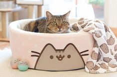 Tabby Cats Grey The new cat collection by Petco features beds, toys, bowls, and collars inspired by the Internet famous Gray Tabby Cat 'Pusheen'. Fat Cats, Cats And Kittens, Ragdoll Kittens, Bengal Cats, White Kittens, Black Cats, Kitty Cats, Cat Vs Dog, F2 Savannah Cat