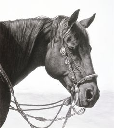 Tripper 2 – Horse drawing by Karmel Timmons
