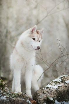 http://ift.tt/1K6283m #animals Icey by IzaLysonArts http://ift.tt/1Uv5eOT