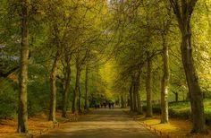 A dreamy walk in the park by George Kontizas