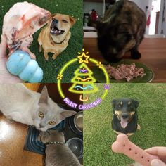Christmas is all about good food right?  #waggachristmas #waggapets #christmastreats #allthefavourites #petsitting #petstagram #suzspetservices