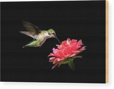 Whispering Hummingbird Wood Print by Christina Rollo. All wood prints are professionally printed, packaged, and shipped within 3 - 4 business days and delivered ready-to-hang on your wall. Choose from multiple sizes and mounting options. Wood Plank Art, Names Of Artists, Small Birds, Office Art, Got Print, Canvas Material, Canvas Art Prints, Hummingbird, Art Images