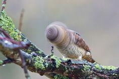 Foto cool de un búho - Owl