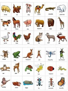 English vocabulary - animals                                                                                                                                                                                 More