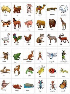 English vocabulary - animals                                                                                                                                                                                 More