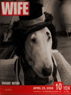 M:Bull terrier (vivian) 3
