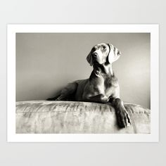 Weimaraner 1 Art Print by Cory Dean. Worldwide shipping available at Society6.com. Just one of millions of high quality products available.