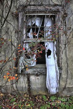 Tattered Curtain Fall '09 No.3 Photograph by Sari Sauls