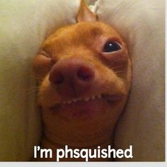 Petit poussin in the morning after a short night . so cute ; Funny Animal Pictures, Cute Funny Animals, Funny Cute, Cute Dogs, Mini Pinscher, Tuna Dog, Ugly Dogs, Dog Memes, Mans Best Friend