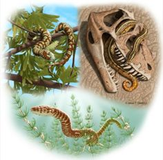 Oldest Known Snakes Discovered - Researchers from the University of Alberta have announced the discovery of not one, but four new species of extinct snake. These fossils, which had previously been misidentified as lizards, now push back the origin of this large and distinctive group by 70 million years. Click pin to read the full article at sciencenutshell.com