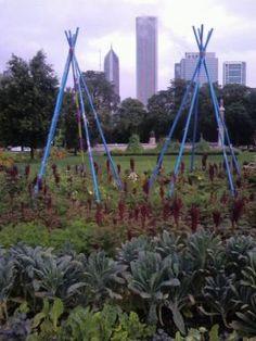 Chicago City Vegetable Garden