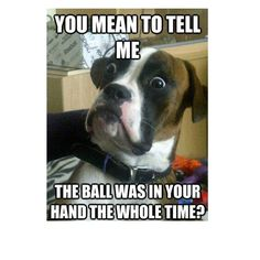 Funny Dogs Memes 38 Funny Quotes Laughing So Hard 1 - Funny Dog Quotes Dog Quotes Funny, Funny Dogs, Funny Animals, Cute Animals, Laugh Quotes, Funniest Animals, Silly Dogs, Post Quotes, Memes Humor