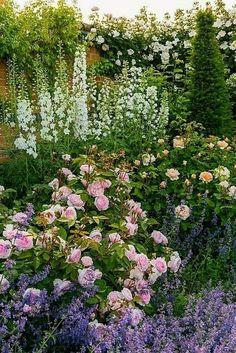 Amazing Gardens, Beautiful Gardens, Beautiful Flowers, Beautiful Pictures, Delphinium, Flower Landscape, Landscape Design, House Landscape, Austin Rosen