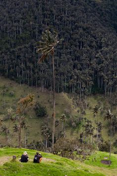 Cocora Valley | Colombia