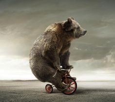 Медведи 13