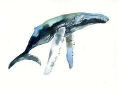 HUMPBACK WHALE Original watercolor painting 10X8inch by dimdi, $35.00