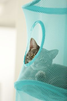 Giggly cats: Ikea tunnel