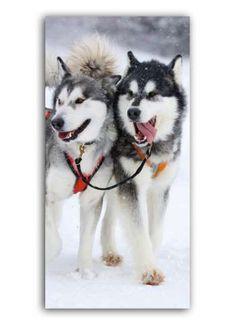 Huskies Motivdruck Papier