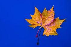 Autumn Drift