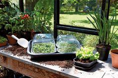 Verticale Tuin Intratuin : Beste afbeeldingen van moestuin intratuin potager garden