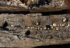 Driftwood and pebbles. Aldeburgh. Glyn Overton.