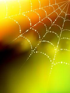 Dew Spider Web Vector Illustration | Lazy Drawing