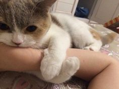 Animals And Pets, Baby Animals, Funny Animals, Cute Animals, I Love Cats, Crazy Cats, Cute Cats, Pretty Cats, Beautiful Cats