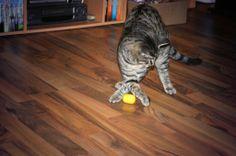 Kaninchenfan Lucky - Mein Kaninchenloch: Schnucki missed the aim a bit... ♡  #cat #neko #katze   http://kaninchenfanlucky-meinkaninchenloch.blogspot.de/2014/01/schnucki-missed-aim-bit.html