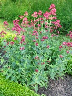 Hydroponics and Indoor Gardening Growing Veggies, Growing Plants, Deer Resistant Perennials, Garden On A Hill, Coastal Gardens, Cut Flower Garden, Gnome Garden, Plant Design, Back Gardens