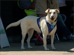 Labrador-Erdelyi Kopo(Hungarian Hound)-Mudi mix   Mischlings-Foto-Domino - Page 42 - Sonstiger Talk rund um den Hund - DogForum.de das große Hundeforum