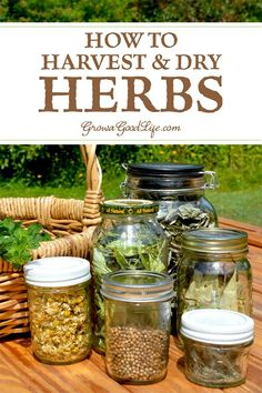How to Harvest and Dry Herbs for Storage There are many ways to dry herbs so that you can enjoy them all year. Visit to learn when to harvest and how to dry herbs to preserve for the greatest flavor intensity and medicinal properties. Healing Herbs, Medicinal Plants, Aromatic Herbs, Organic Gardening, Gardening Tips, Container Gardening, Vegetable Gardening, Fairy Gardening, Gardening Magazines