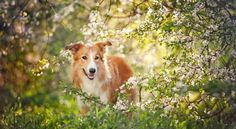 12 Homeopathic remedies for your dog!