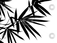 Bamboo Leaves Silhouette Background stock photo, A photographic illustration of black bamboo leaves on a white background by Stefan Breton Leaf Silhouette, Silhouette Cameo, Bamboo Leaves, Black Bamboo, Japanese Prints, Leaf Prints, Hair Accessories, Stock Photos, Black And White